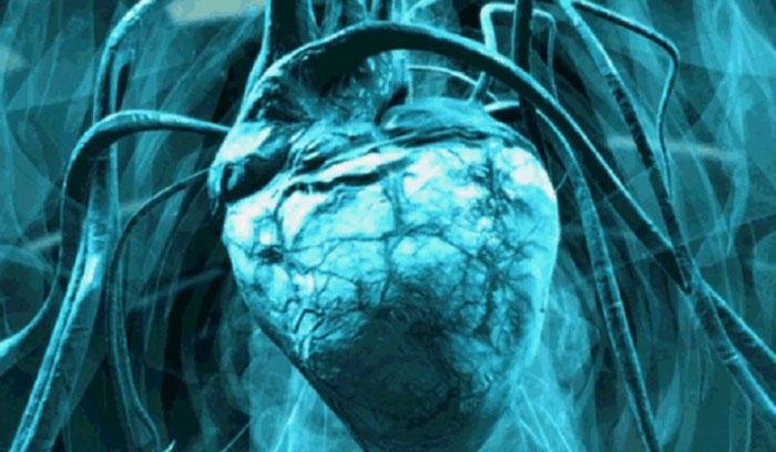 结构比较简单的心脏大不相同,显示出恐龙生前具有独立的体循环和肺